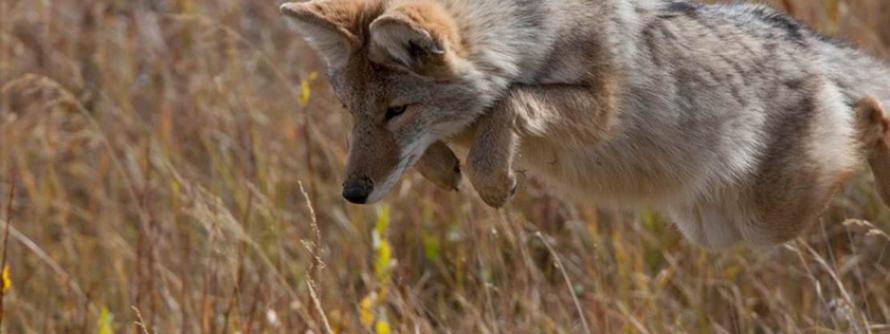 Predatory Animals Banner Image
