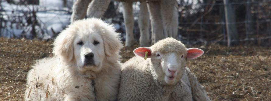 Dog and Lamb