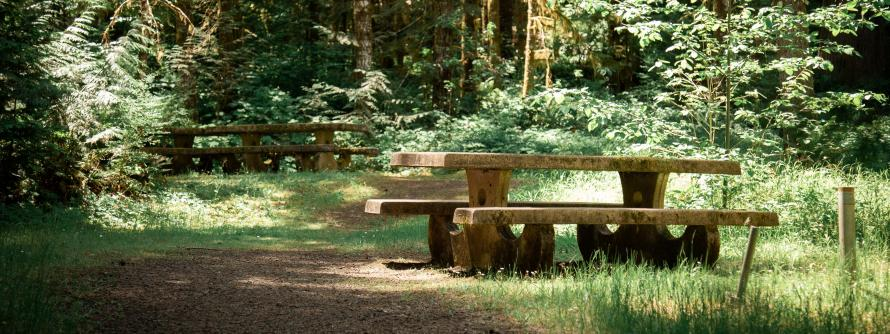 a picnic table sits in the middle of lush green grass surrounded by large timbers