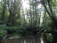 Upper Greasy Creek, native trees providing shade to stream
