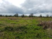 North boundary wetland prairie habitat