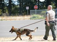K-9 Deputy team working.