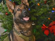 K-9 Vortex ready for the holidays.