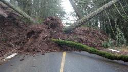 A mudslide and fallen trees completely cover both lanes of a paved road.
