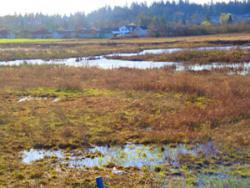 Stormwater Wetlands Project