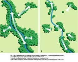 Wetland Diagram