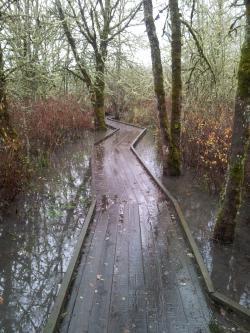 Jackson-Frazier Wetland