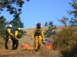 Oregon Dept. of Forestry partners for completing prescribed burns for natural habitat enhancement