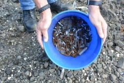 Bucket full of shell casings