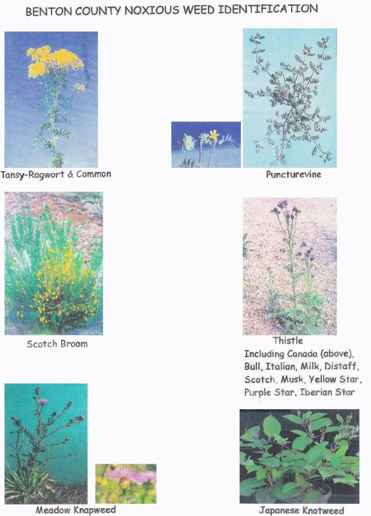 Benton County Noxious Weed Identification